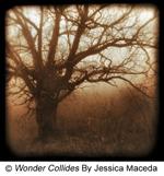 Wonder Collides by Jessica Maceda, 2009 Winner Flora and Fauna